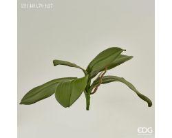 Foglia Orchidea con Radici 231410.70