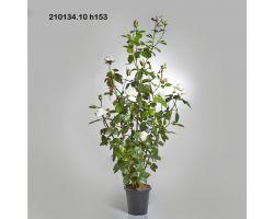 ROSA GARDEN CON VASO H 153 cm 210134.10