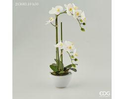 Piantina Orchidea Phalaenopsis Real in Vaso H 50 213683.10