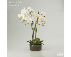 Pianta Orchidea Phalaenopsis Real in Vaso H 70 213684.10