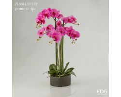 Pianta Orchidea Phalaenopsis Real in Vaso H 70 213684.59