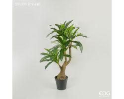 Pianta Dracena Chic con vaso H 140 cm 231599.70