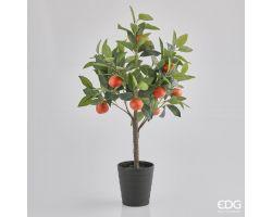 Pianta Mandarino con vaso H 75 cm 250516.30