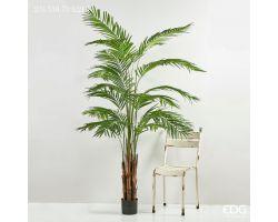 Pianta Palma ARECA con vaso pvc H 215 cm 231538.70