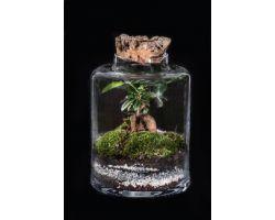 Ficus in vetro con tappo in sughero Ø19xH25cm FLOR MAISON Fanny EDEN 001