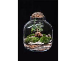 Ficus in vetro con tappo di sughero Ø26xH29cm FLOR MAISON Katy EDEN 001