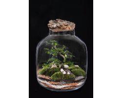 Bonsai in vetro con tappo in sughero Ø34xH38cm FLOR MAISON Katy EDEN 002