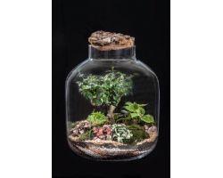 Bonsai in vetro con tappo in sughero Ø38xH43cm FLOR MAISON Katy EDEN 003