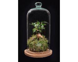 Kokedama in vetro con base in legno Ø16xH35cm FLOR MAISON Mila EDEN 001