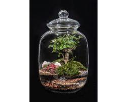 Bonsai in vetro Ø23xH42 cm FLOR MAISON Elodie EDEN 001