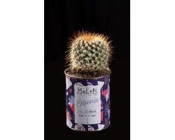 Cactus in vaso di latta riciclata \