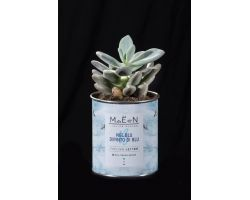 Cactus in vaso di latta ricicl. \