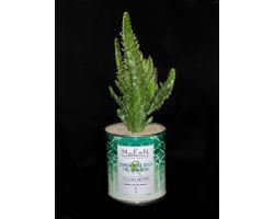 Cactus in vaso di latta ricic\
