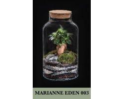 Ficus Ginseng in vetro con tappo in sughero Ø18xH30 cm FLOR MAISON