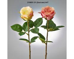 ROSA REX H 47 COLORE MISTO 219651.31