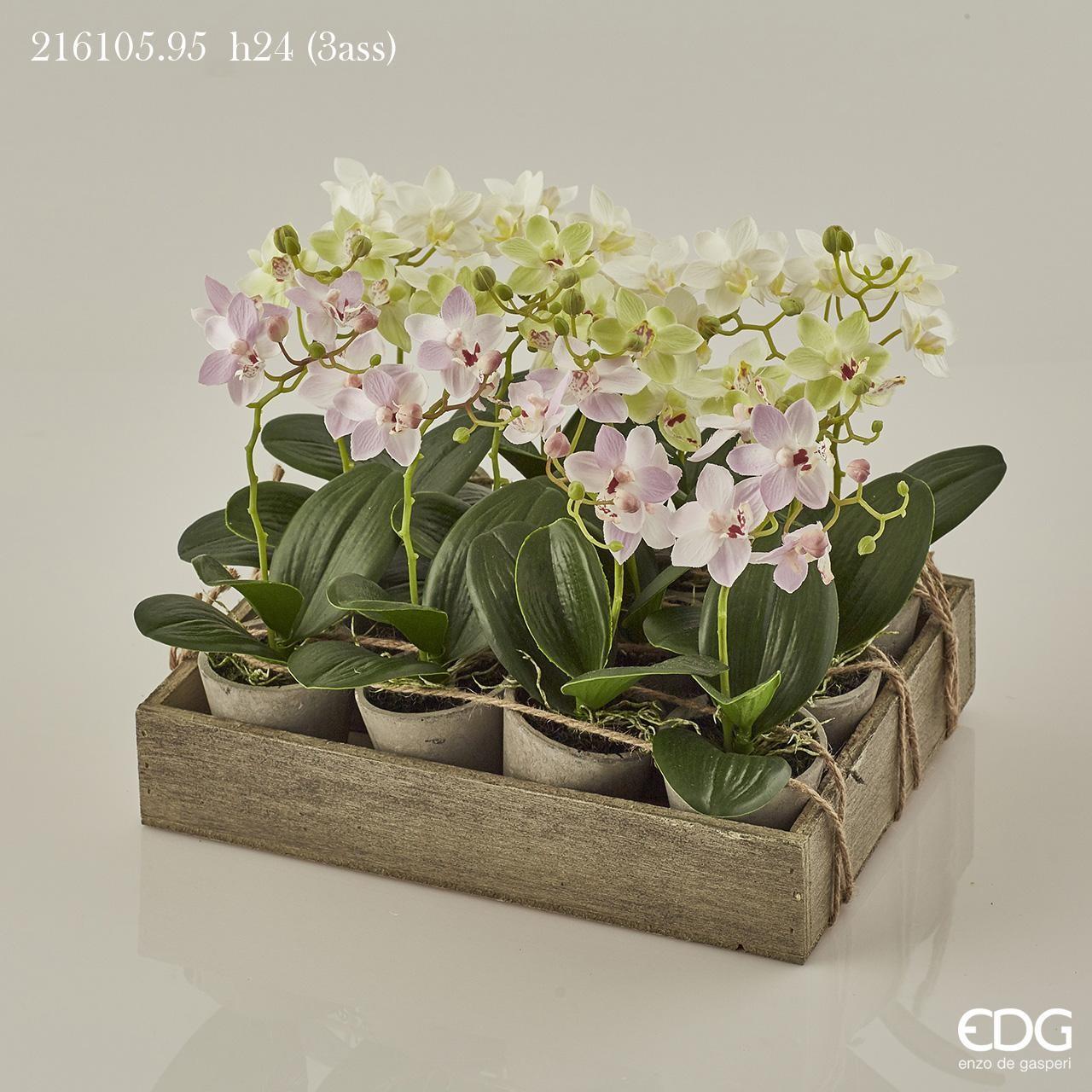 Piantina orchidea phalaenopsis in vaso arte for Vaso orchidea
