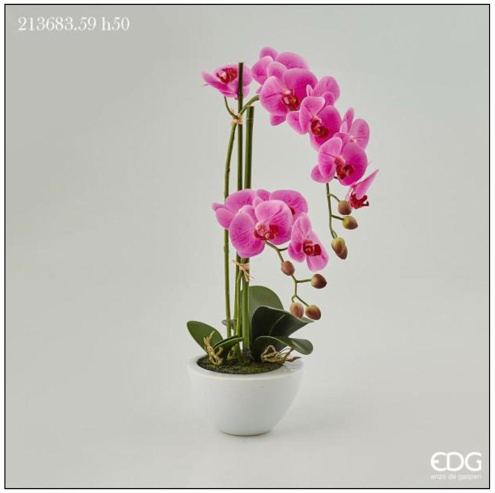 Piantina orchidea phalaenopsis real in vaso h 50 for Vaso orchidea