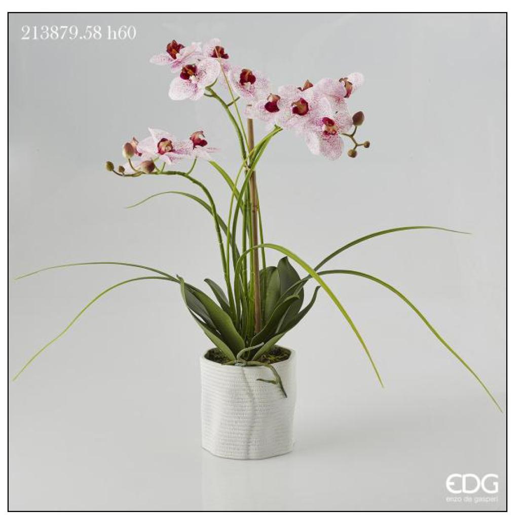 Piantina orchidea phalaenopsis real in vaso h 60 for Orchidea finta